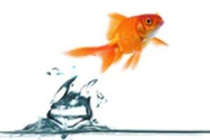 Családi vállalkozást indítana halacska